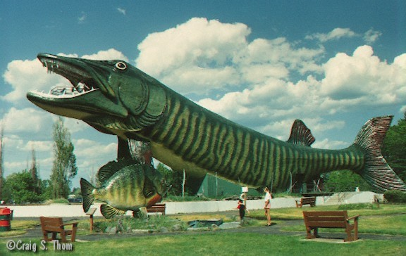 301 moved permanently for World largest fish